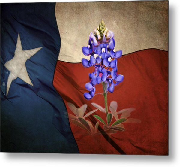 Lone Star Bluebonnet Metal Print
