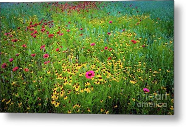 Mixed Wildflowers In Bloom Metal Print