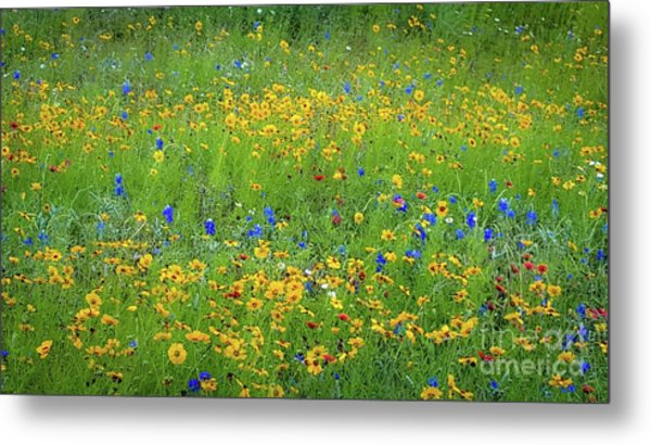Mixed Wildflowers In Texas 538 Metal Print