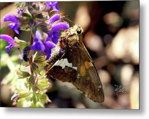 Moth On Purple Flower Metal Print