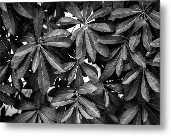 Nature Background, Green Leaves, Flowers In Natural Light And Sh Metal Print