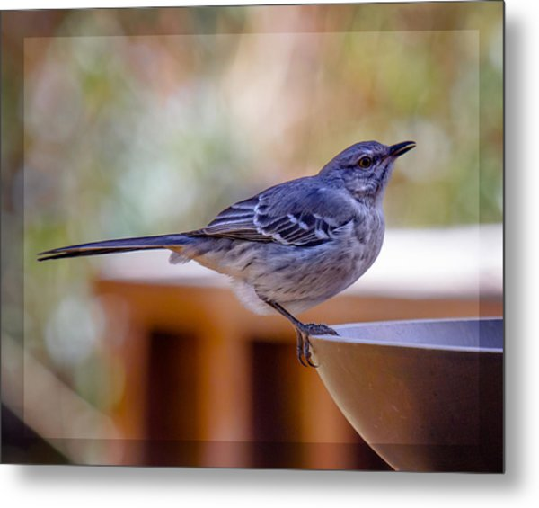 Metal Print featuring the photograph Northern Mockingbird by Robert L Jackson