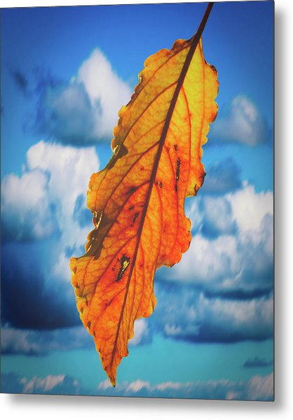 October Leaf B Fine Art Metal Print