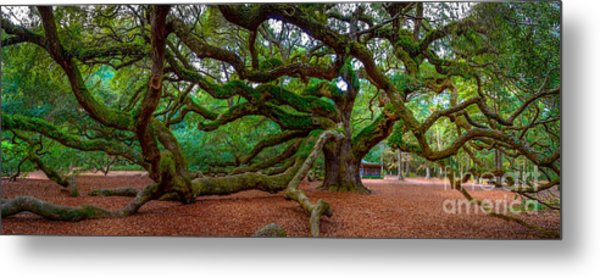 Old Southern Live Oak Metal Print