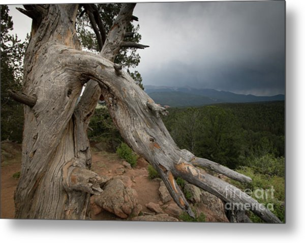 Old Tree On The Mountain Metal Print
