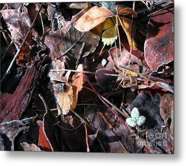 On The Path To Loveland II Metal Print by Donna Stewart
