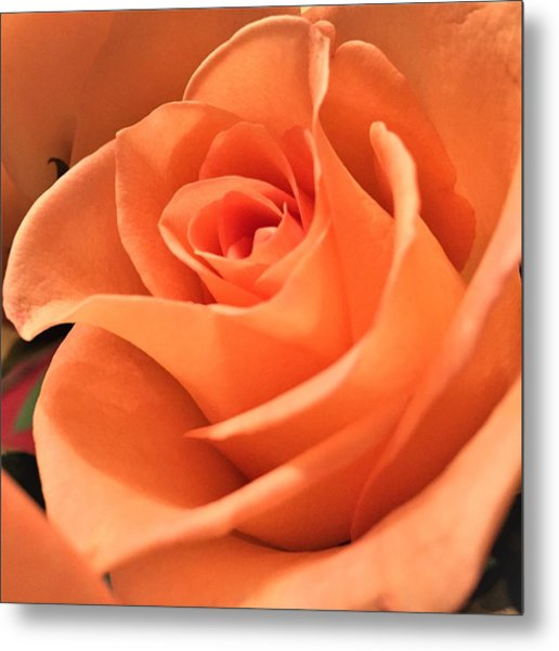 Metal Print featuring the photograph Orange Rose by Cristina Stefan