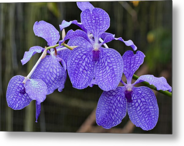 Orchid Metal Print by Theo Tan
