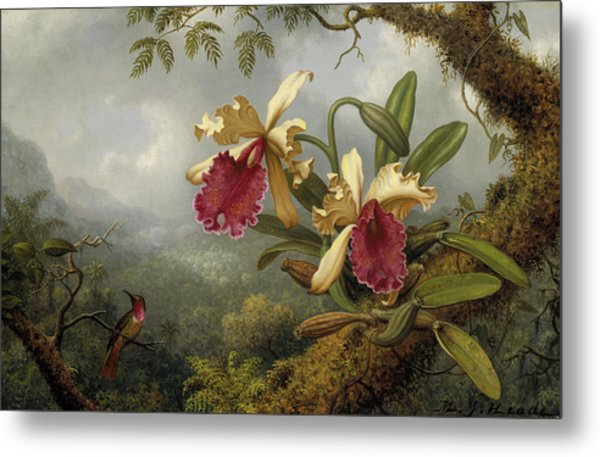 Orchids And Hummingbird Metal Print