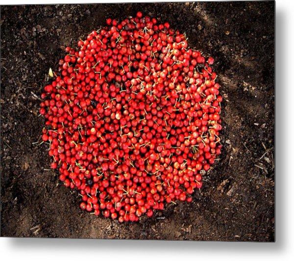 Organize Red Berries Metal Print by Lizzie  Johnson