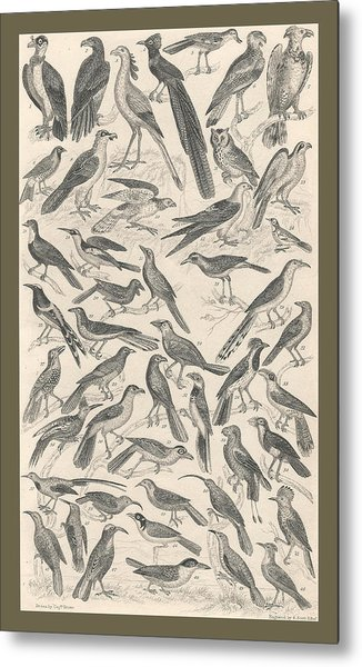 Ornithology Metal Print