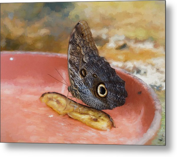 Metal Print featuring the photograph Owl Butterfly 2 by Paul Gulliver