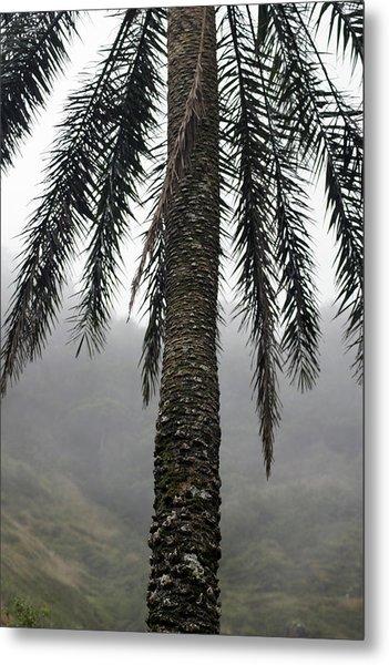 Palm, Koolau Trail, Oahu Metal Print