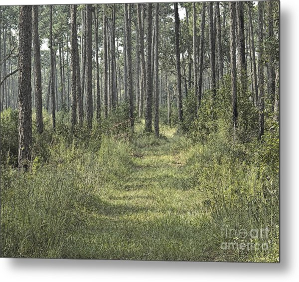Path In The Woods Metal Print