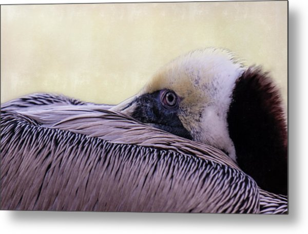 Pelican Connection 2 Metal Print