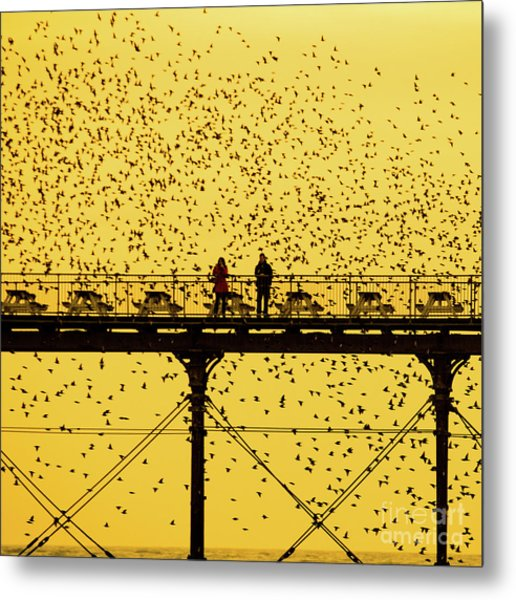 People On The Pier Sunset And Starlings In Aberystwyth Wales Metal Print