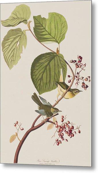Pine Swamp Warbler Metal Print