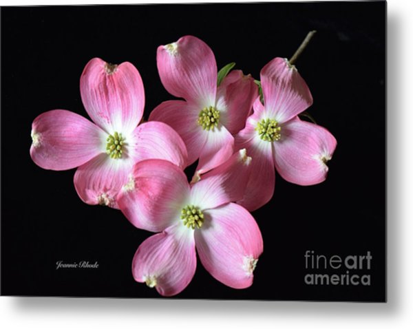 Pink Dogwood Branch Metal Print