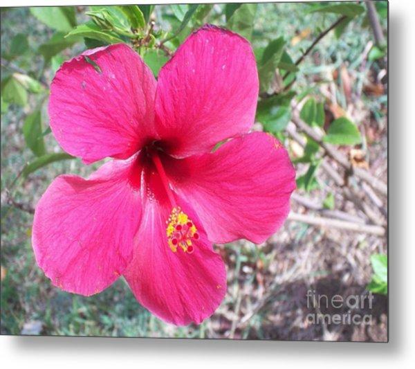 Pink Hibiscus Beauty Metal Print