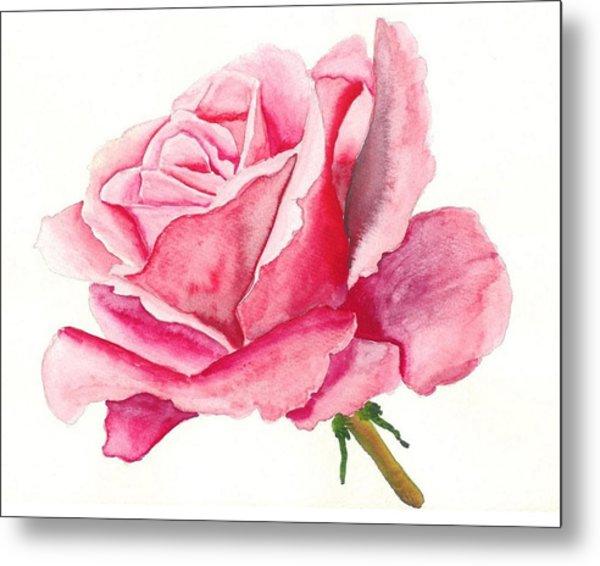 Pink Rose Metal Print by Robert Thomaston