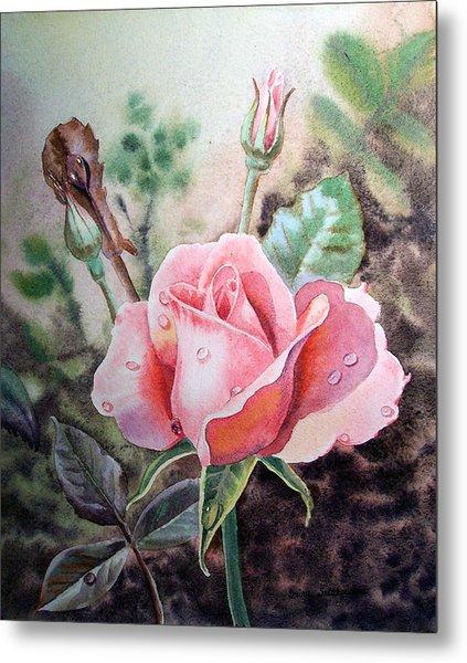 Pink Rose With Dew Drops Metal Print
