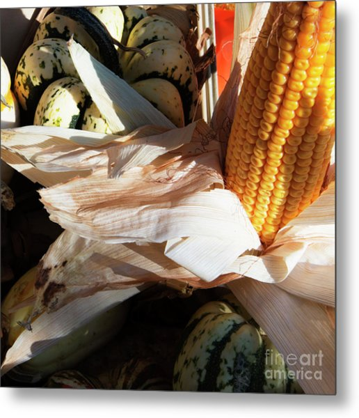 Pumpkin And Corn Metal Print