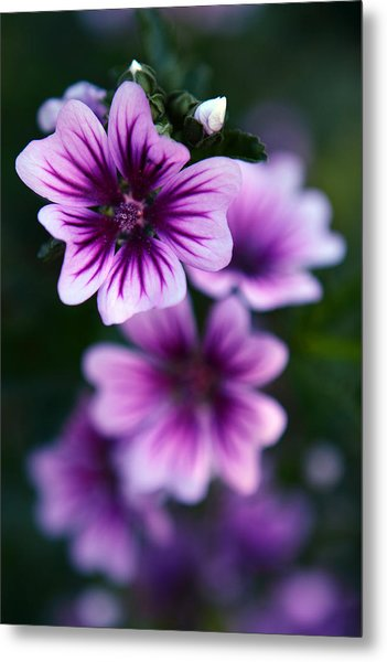 Purple Beauties Metal Print