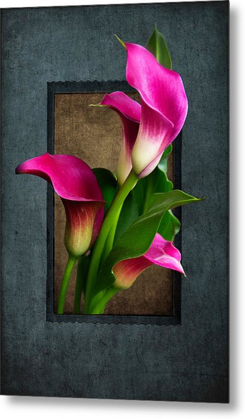 Purple Calla Lily Metal Print