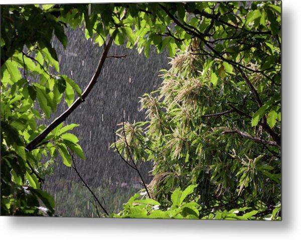 Rain Metal Print