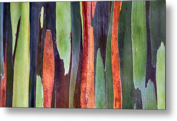 Metal Print featuring the photograph Rainbow Eucalyptus by Susan Rissi Tregoning