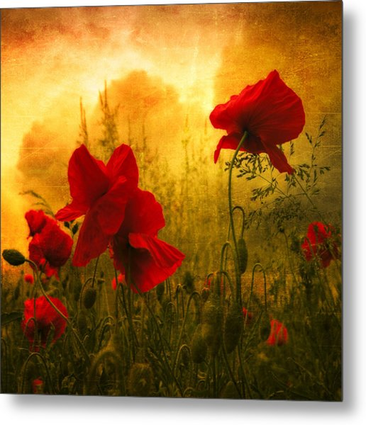 Red For Love Photograph by Philippe Sainte-Laudy