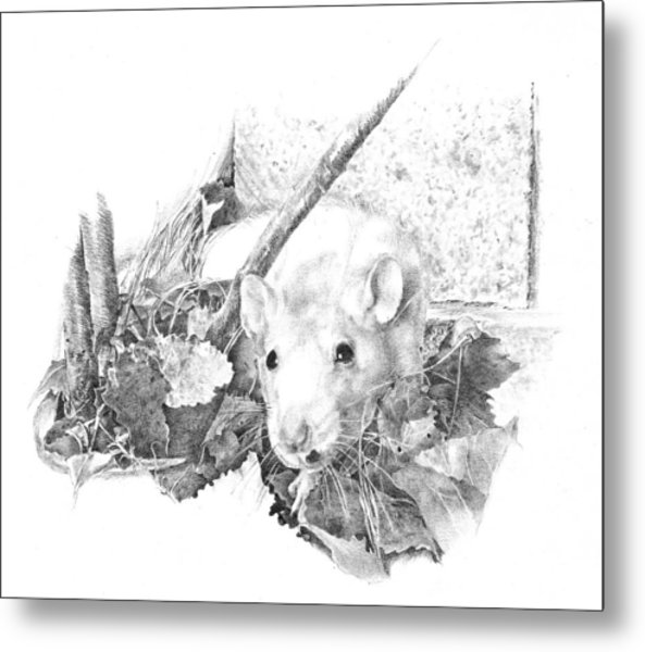 Reggie The Rat Metal Print by Judith Angell Meyer