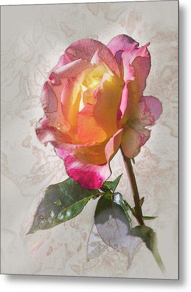 Rosa, 'glowing Peace' Metal Print