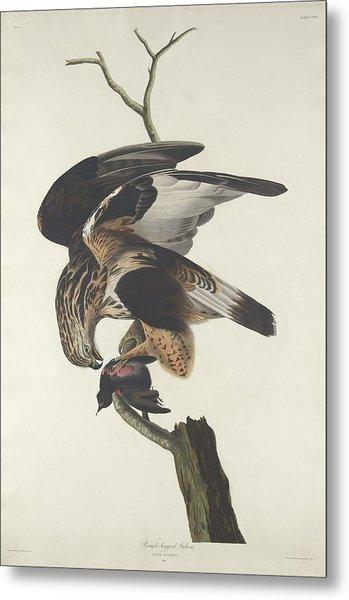 Rough Legged Falcon Metal Print