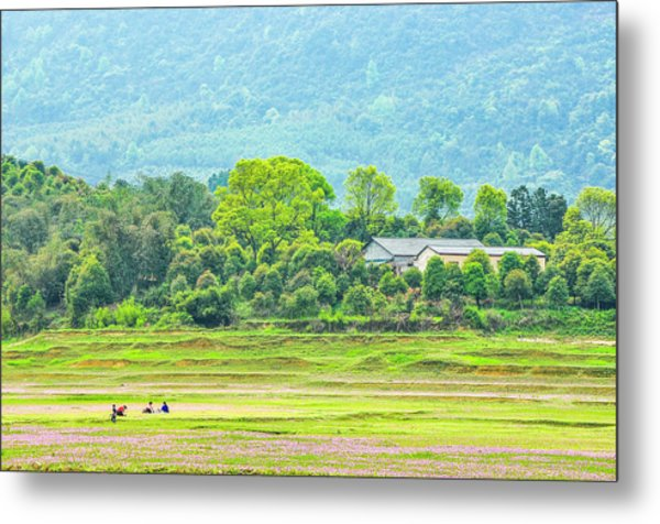 Rural Scenery In Spring Metal Print