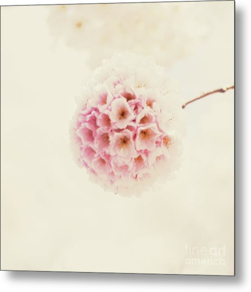 Sakura Metal Print by Starfish Media