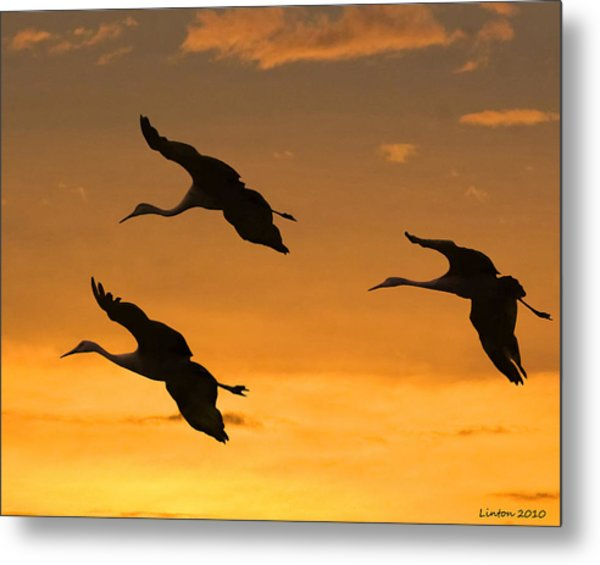 Sandhill Cranes At Dusk Metal Print