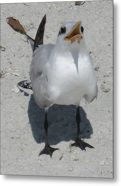 Seagull 2 Metal Print