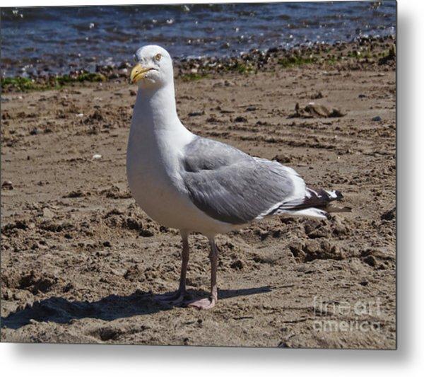Seagull On Beach Metal Print