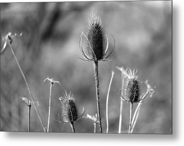 Simply Thistle Metal Print