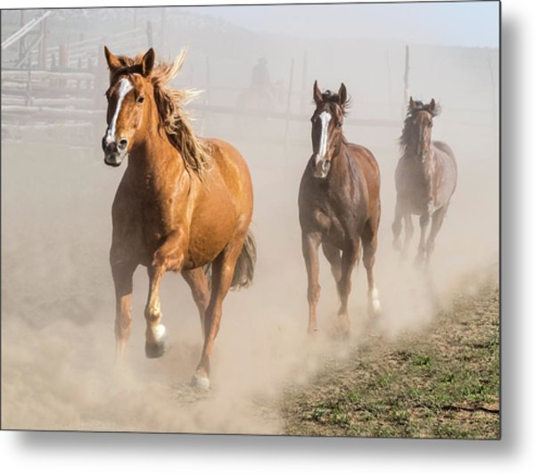 Metal Print featuring the photograph Sombrero Ranch Horse Drive At The Corrals by Nadja Rider
