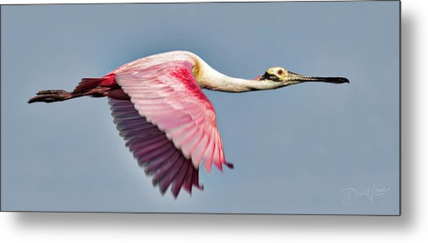 Metal Print featuring the photograph Speedy Spoonbill by David A Lane