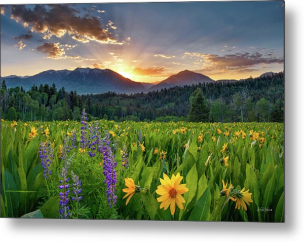 Spring's Delight Metal Print by Leland D Howard