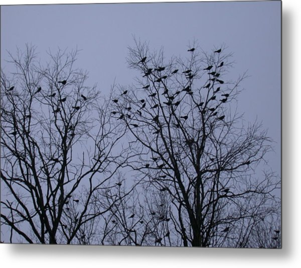Starlings Metal Print