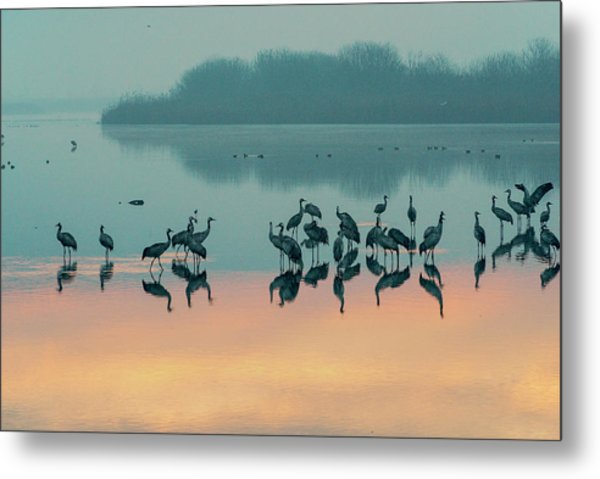 Sunrise Over The Hula Valley Metal Print