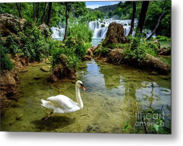 Swan In The Waterfalls Of Skradinski Buk At Krka National Park In Croatia Metal Print