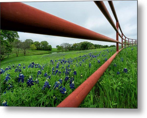 Texas Bluebonnets In Ennis Metal Print