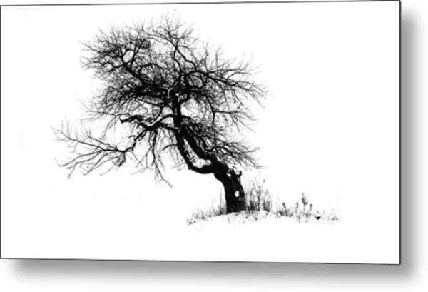 The Apple Tree Metal Print