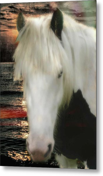 The Beautiful Face Of A Gypsy Vanner Horse Metal Print