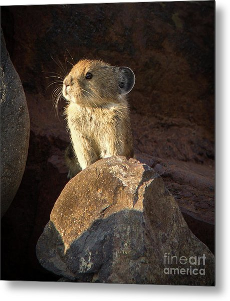 The Coast Is Clear Wildlife Photography By Kaylyn Franks Metal Print